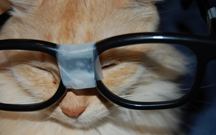 Google Glass Cat